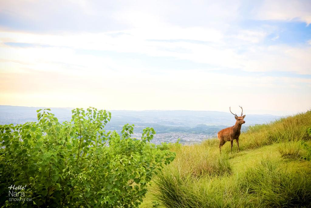 奈良若草山 小鹿伴你登高欣賞奈良街町、東大寺美景