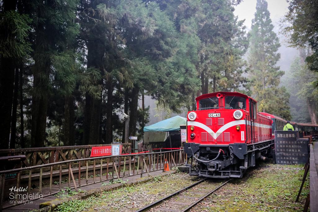 嘉義阿里山,台灣阿里山,嘉義景點,嘉義旅遊,小火車,森林浴,神木