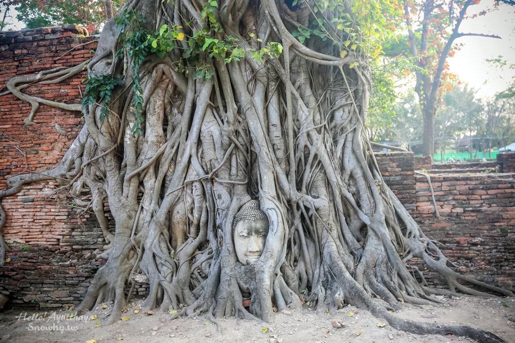 泰國大城 | Wat Maha That 瑪哈泰寺.大城世界文化遺產,親眼目睹樹中佛頭奇景