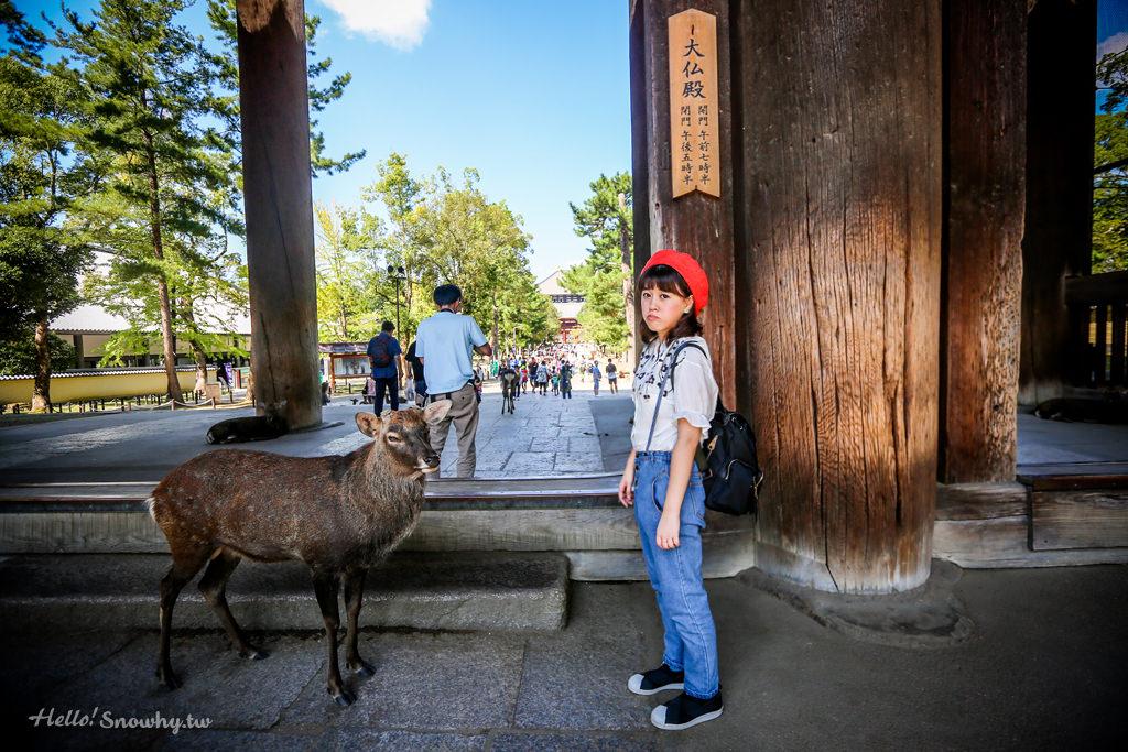 奈良東大寺,奈良,日本世界文化遺產,奈良自由行,關西旅遊,京都景點,奈良景點,日本