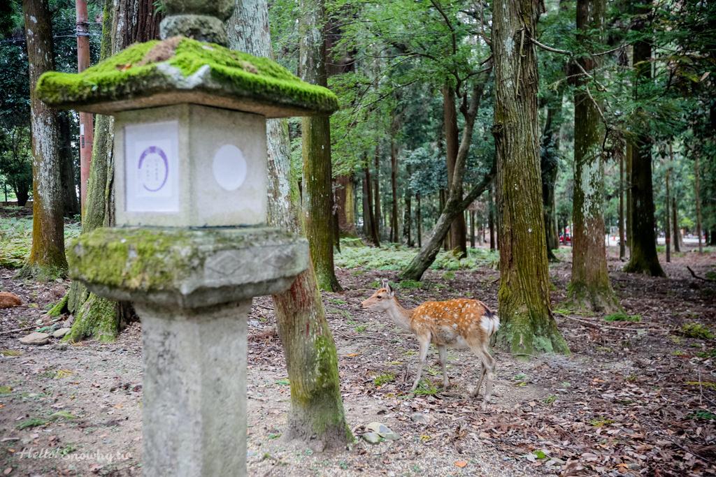 奈良,春日大社,奈良鹿,世界文化遺產,奈良景點,關西自由行