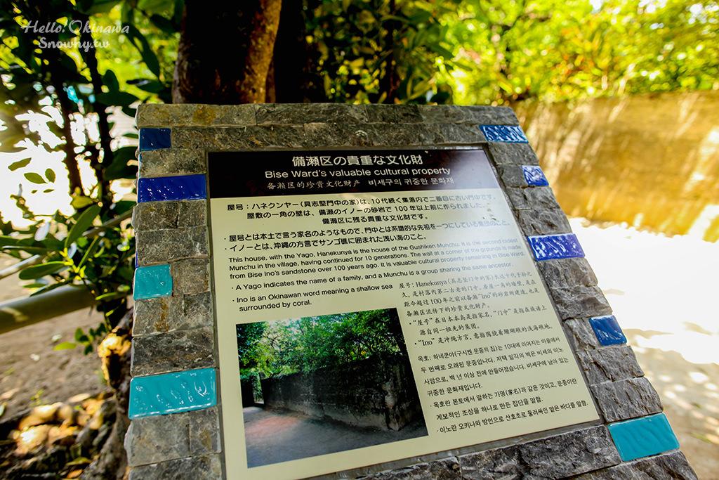 沖繩景點,備瀨福木林道,備瀬のフクギ並木,沖繩自由行,沖繩美麗海