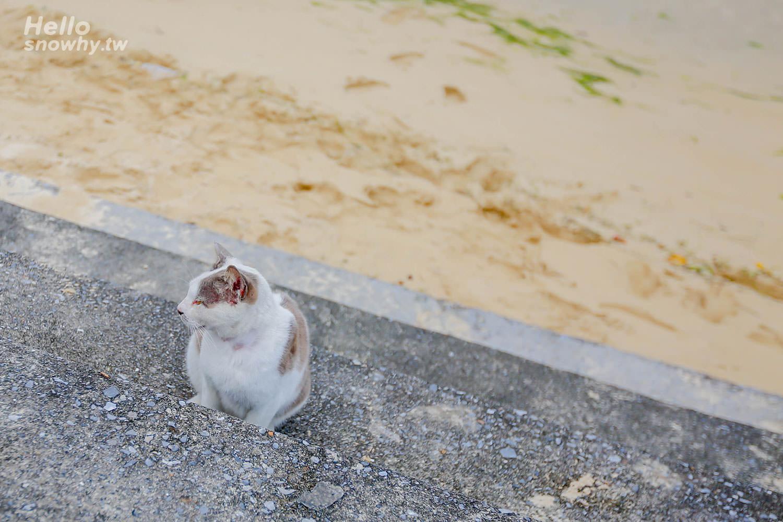沖繩景點,貓咪之島,奧武島,奧武島半日遊攻略,中本天婦羅,龍宮神,南城景點,沖繩離島,奧武島貓咪,奧武島天婦羅,,奧武島美食,,奧武島交通