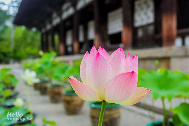 奈良唐招提寺,唐招提寺,奈良,日本世界文化遺產,世界文化遺產唐招提寺,奈良自由行,奈良世界文化遺產,關西旅遊,京都景點,奈良景點,日本,世界文化遺產