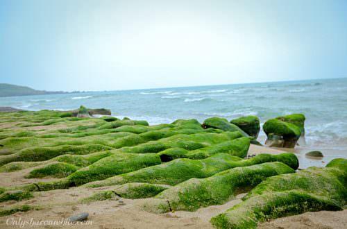 石門區老梅綠石槽,季節限定,綠色夢幻海岸,新北