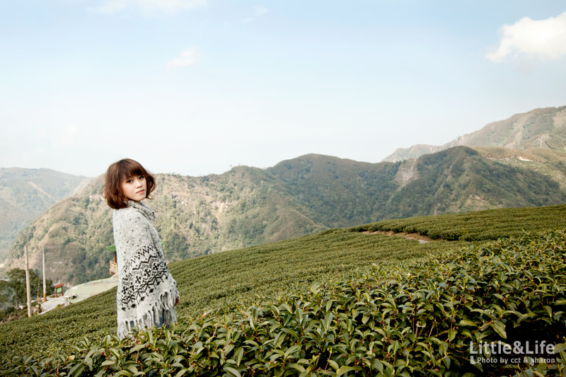南投 | 竹山軟鞍八卦茶園.台灣最美麗的茶園