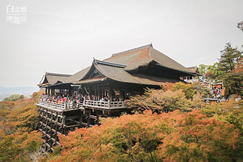 日本賞楓季,紅葉情報,楓葉預測,賞楓景景,日本自由行