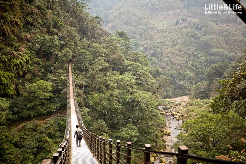 南投 | 世界二十大奇景.竹山天梯 (梯子吊橋)