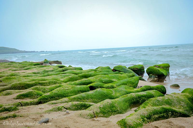 新北石門區老梅綠石槽.北海岸季節限定綠色夢幻海岸!